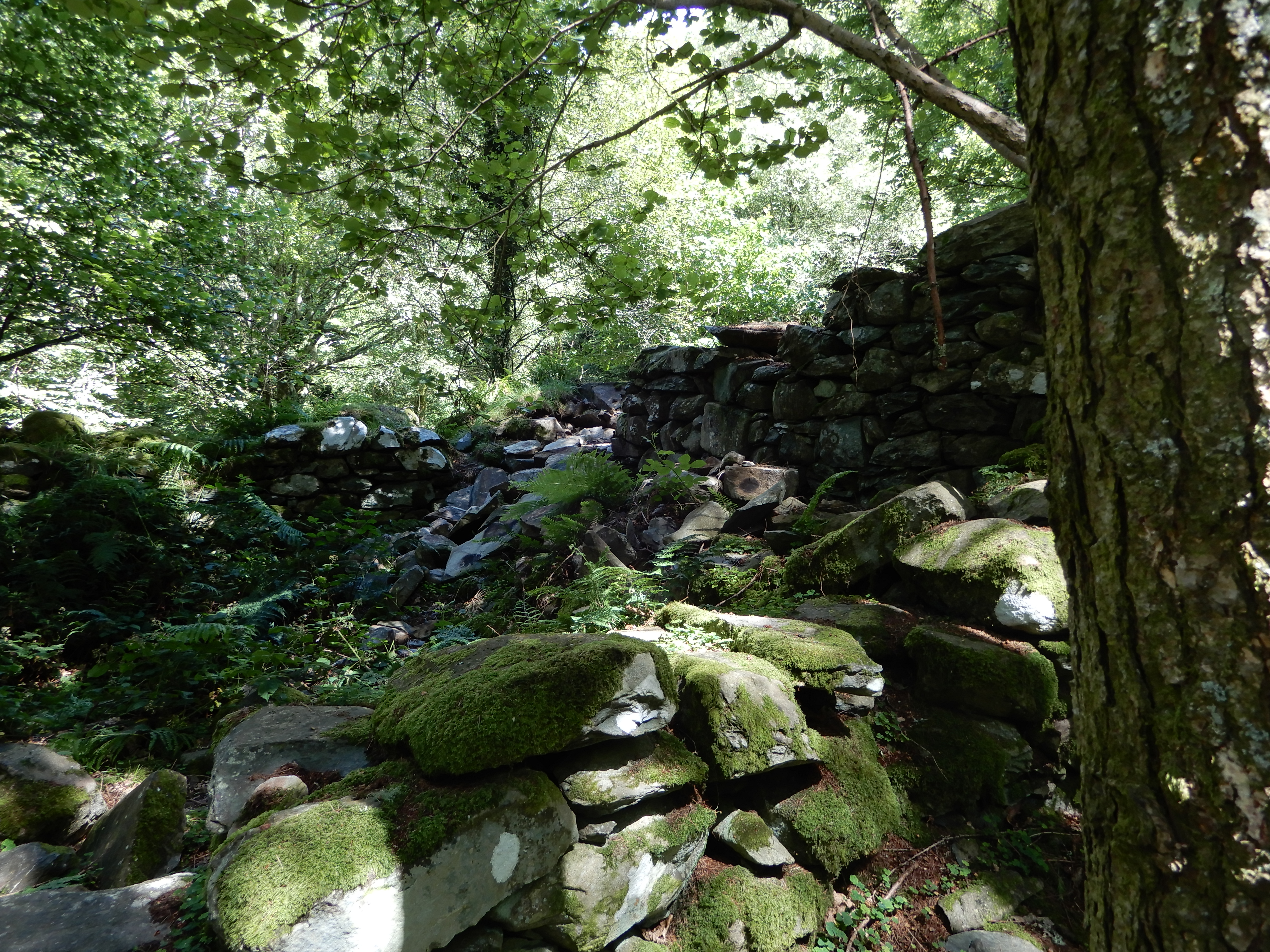 Photo of derelict stone cottage walls