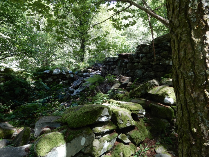 Photo of derelict stone cottage walls